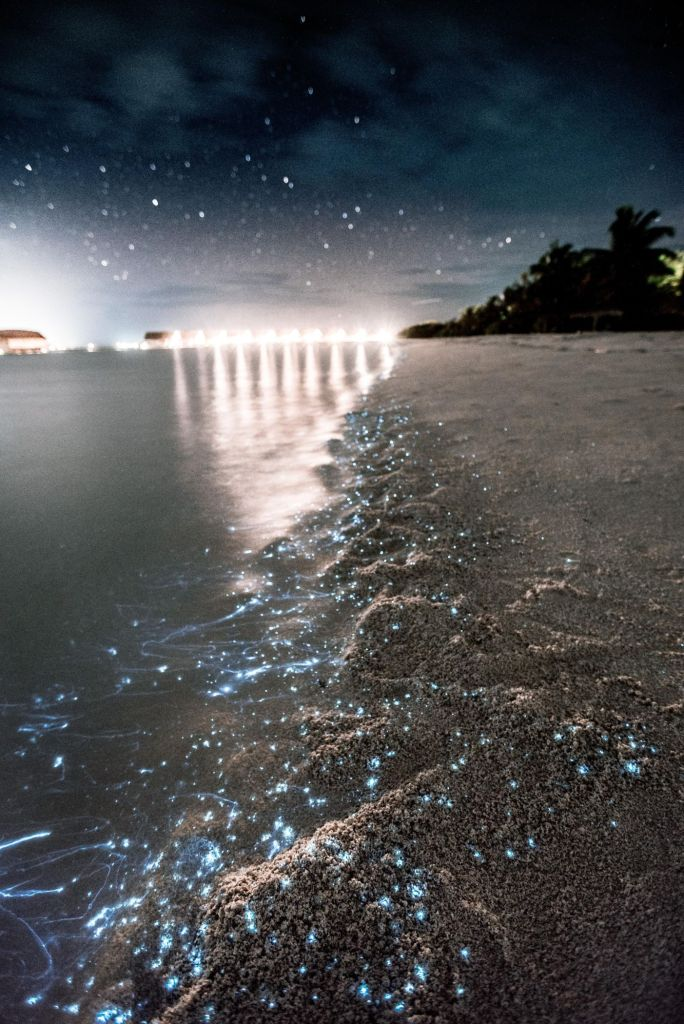 kevin-wolf-bioluminiscencia-unsplash