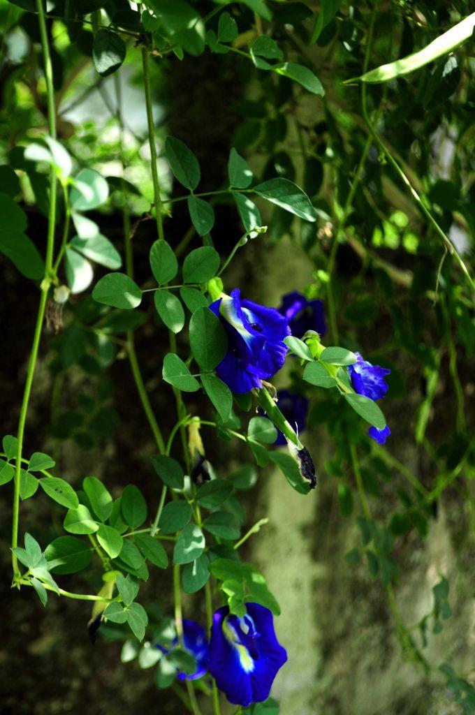 lam-thuy-blue-butterfly-unsplash
