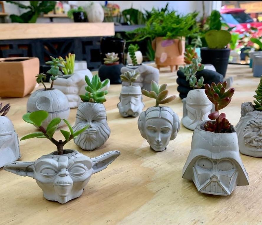 sucu-sucu-plantas