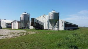 A picture of our finisher barns. Feed is stored in the bins.