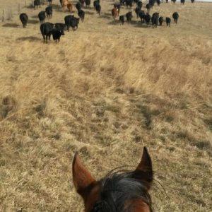 April Fools horse
