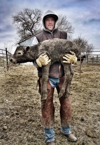 Drew Weyers Calving Carrying Silver