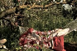 Jane's Tea garden