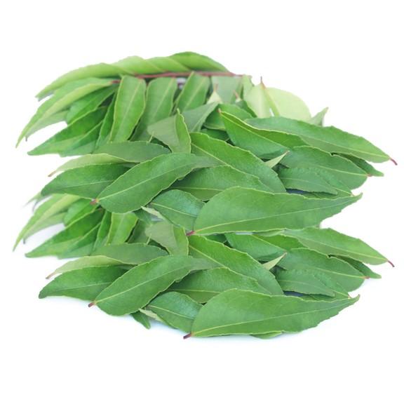 Nigerian curry leaf
