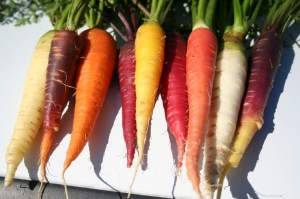Carrot Variety