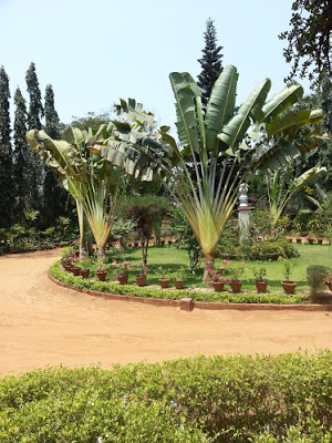 Horticultural Society Chennai - A garden from another time