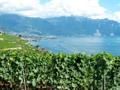 Wine Trail in Vaud, Switzerland