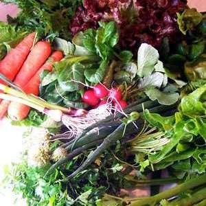 Silver Lake CSA Vegetables