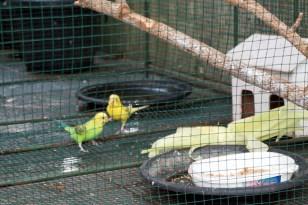 food-guide-bali-leisure-blog-at-Eden-Kuta-36