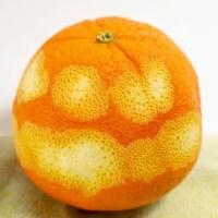 Blueberry orange zestmuffin