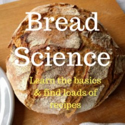 Learn all about the science of breadl both the basics as well as several recipes. | foodcrumbles.com