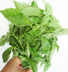 bunch of fresh basil leaves