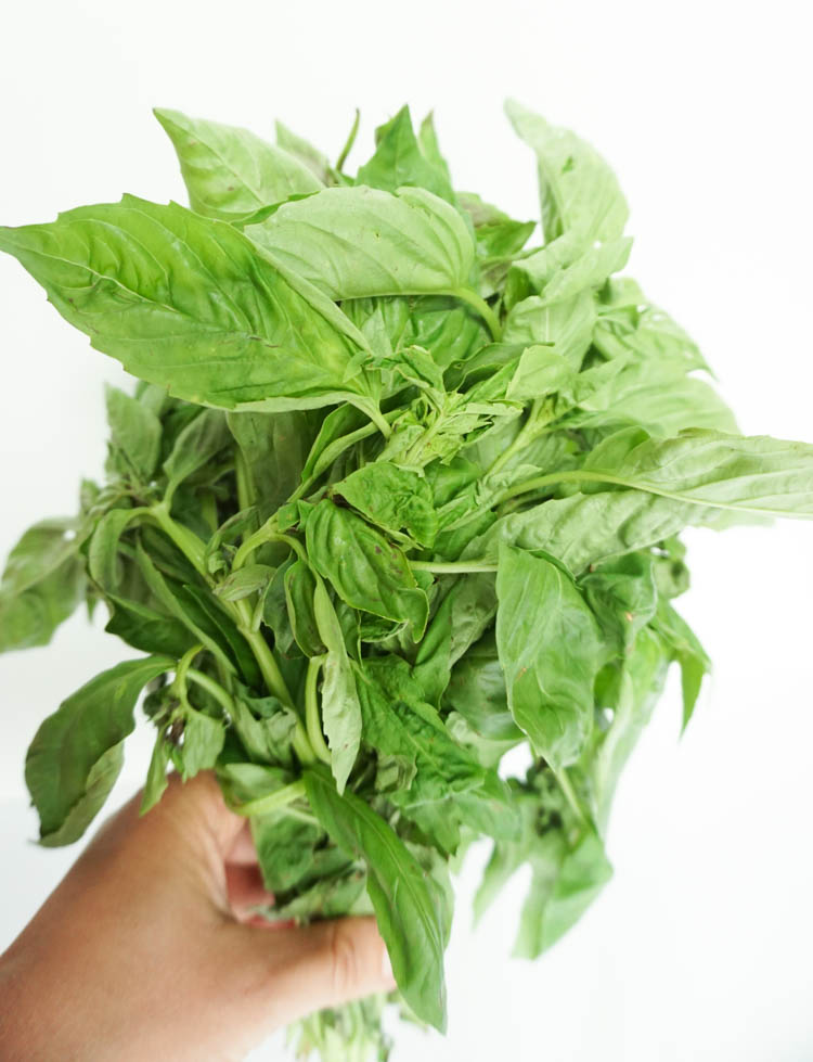 Flavour of basil – Herb science