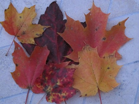 Fall Colors - Photo by Janet Green