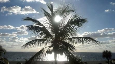 MJA - Fort Lauderdale - 1779131_10152270415262140_1204286356_n