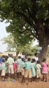 shea-tree
