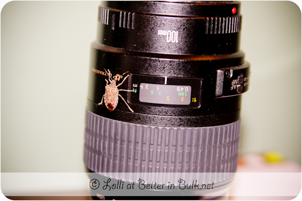 stink bug on camera lens