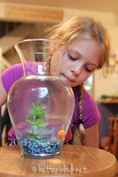 pet-sitting a goldfish
