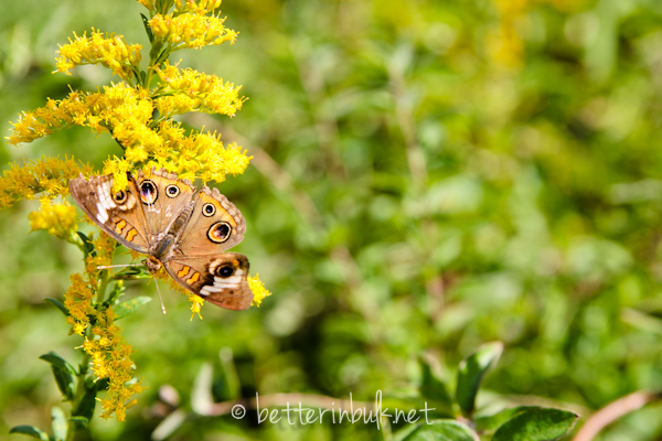 brown and black butterfly - nature photography