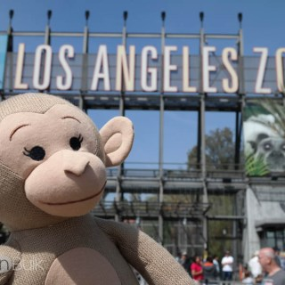 Celebrating Monkey Kingdom at the Los Angeles Zoo #MonkeyKingdom