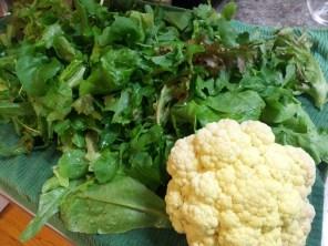 Cauliflower and Lettuce