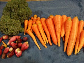 Carrots, radishes, and broccoli at end of December!