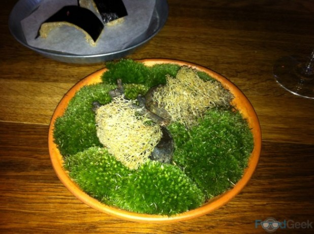 Deep Fried Reindeer Moss