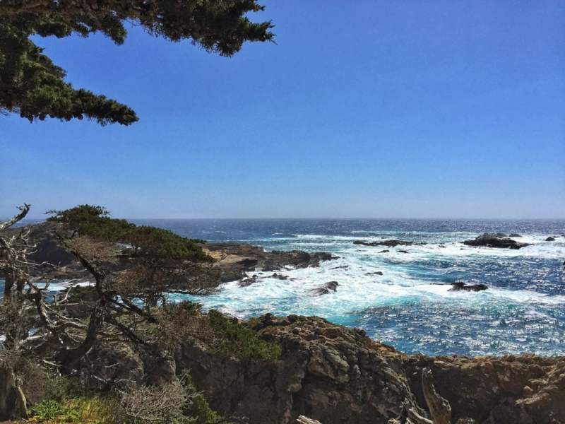 Foodicles Point Lobos 9