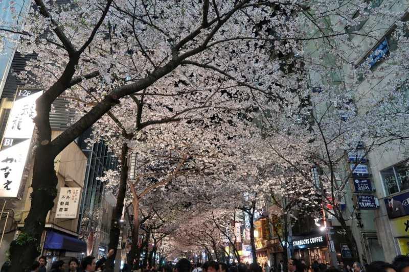 Sakura Dori Tokyo