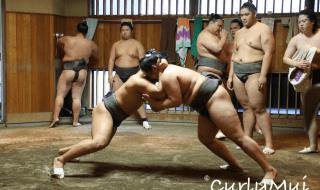 【東京相撲見學】 淚與汗的見證