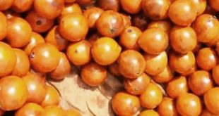 African Cherry-Agbalumo