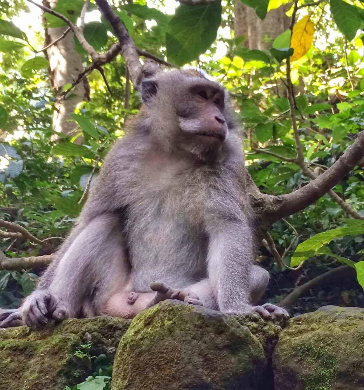 Monkey Forsest Ubud - Ultimate Bali Travel Guide