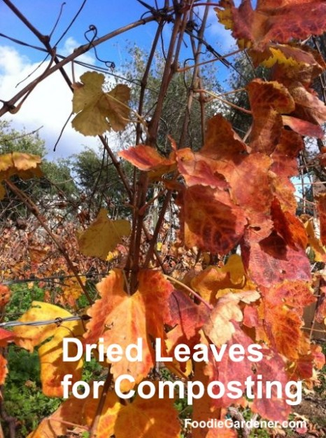 dry leaves excellent compost material foodie gardener