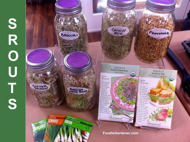 sprouted seeds nuts beans foodie gardener