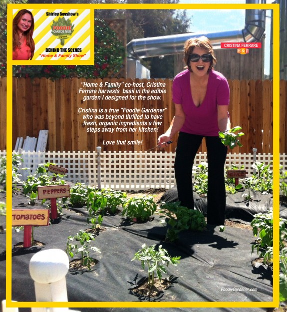 cristina ferrare loves her vegetable garden by shirley bovshow on Home and Family show