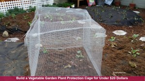 Build a vegetable garden plant protection cage from garden mesh as seen on Home & Family show, Hallmark channel