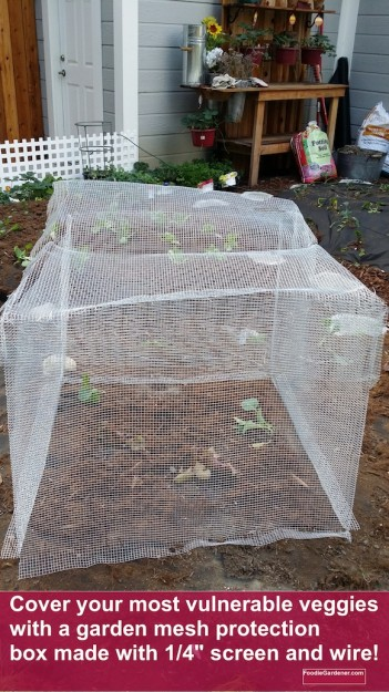 Plant mesh protector cage foodie gardener