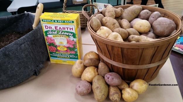 grow potatoes in grow bag organically foodie gardener