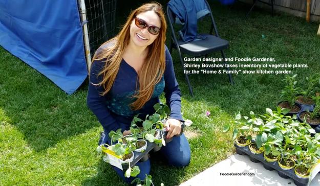 garden designer foodie gardener shirley bovshow inventories plants for home and family show kitchen garden