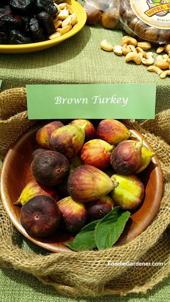brown turkey figs in wood bowl foodie gardener shirley bovshow