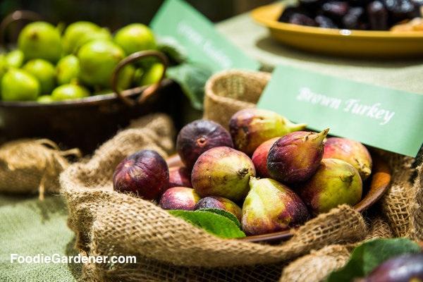 brown turkey figs in bowl