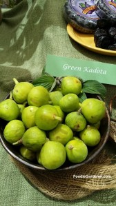 fresh green kadota figs foodie gardener shirley bovshow
