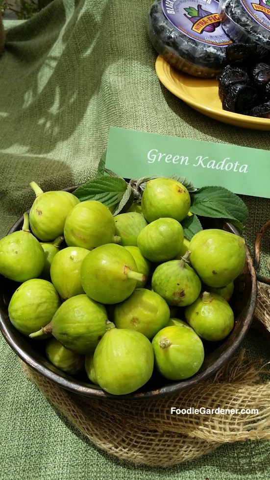 fresh green kadota figs foodie gardener shirley bovshow