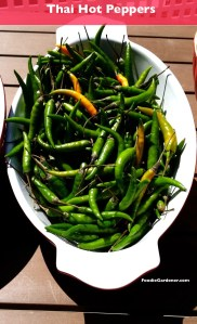 Thai peppers hot spicy indian thai vietnamese recipes foodiegardener