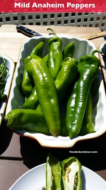 large anaheim peppers are mild stuffed chile rellenos foodiegardener