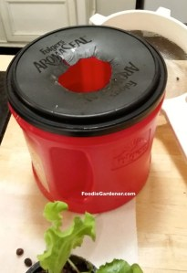 folgers coffee container top with hole for net pot hydroponic lettuce planter foodie gardener