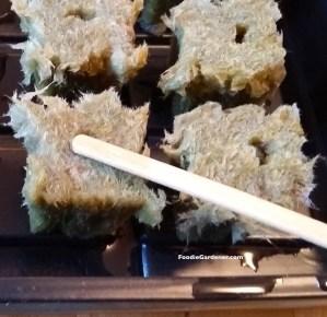 plant lettuce seed in rock wool with wood stick foodie gardener