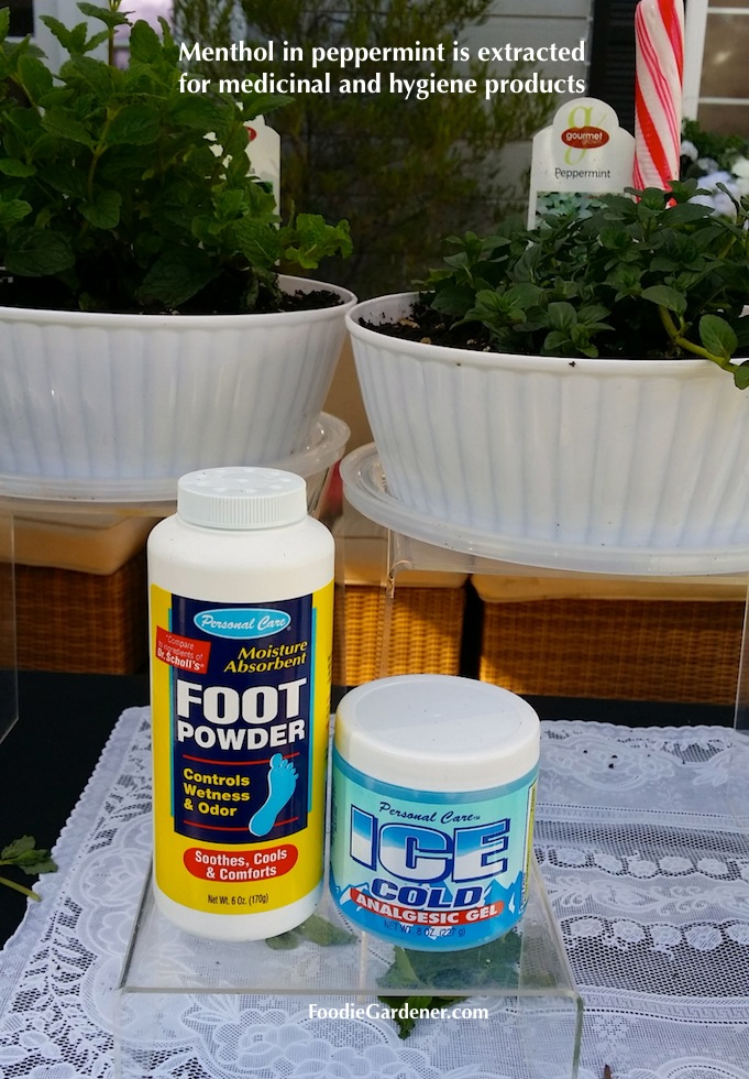foot powder ice cold muscle gel with menthol from peppermint plant foodie gardener blog