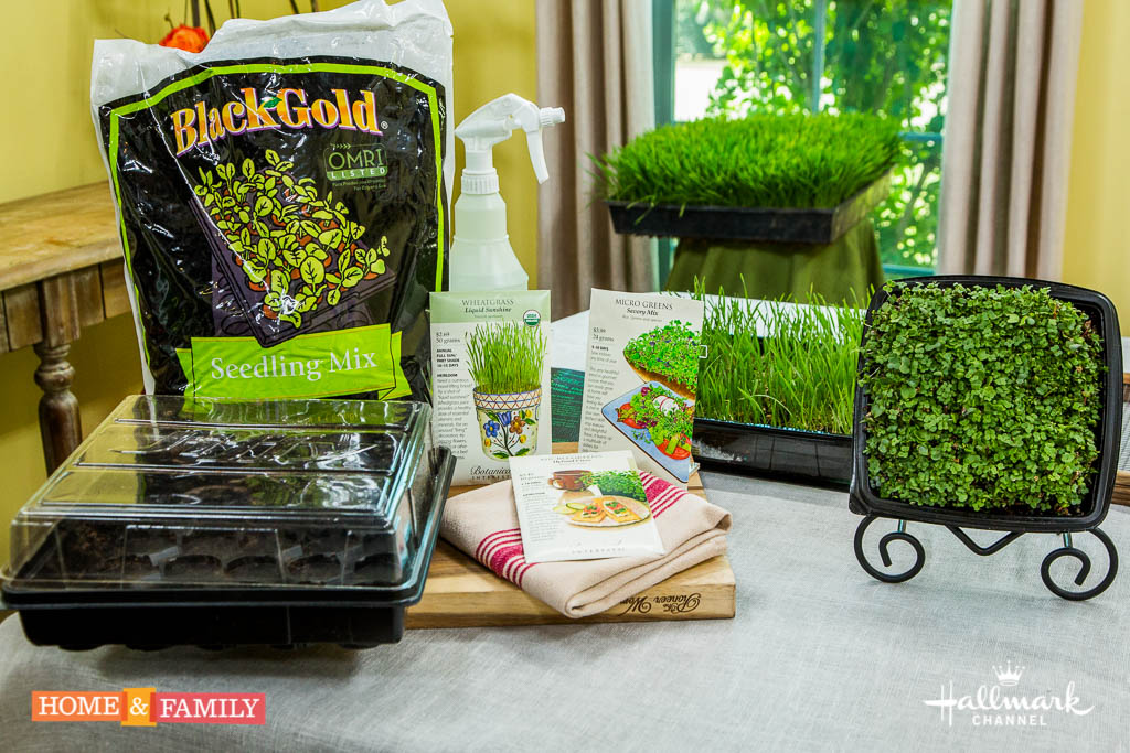 GROW MICRO GREENS AND WHEATGRASS INDOORS IN 10-14 DAYS