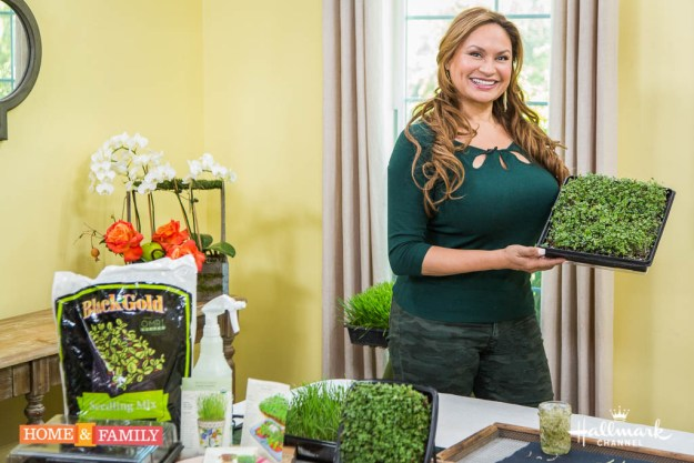 LANDSCAPE-EDIBLE-GARDEN-DESIGNER-SHIRLEY-BOVSHOW-GROWS-WHEATGRASS-MICROGREENS.